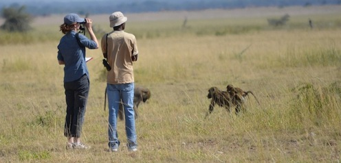 Observing the baboons